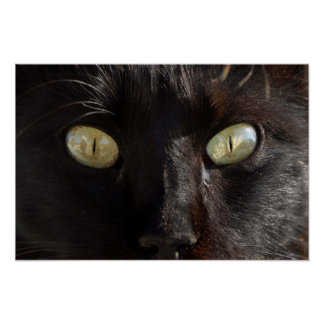 Black cat green eyes photography poster