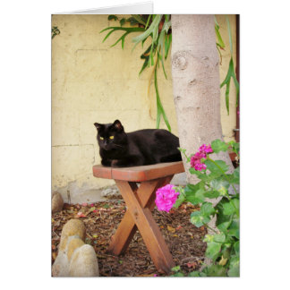 Black Cat in Garden Card