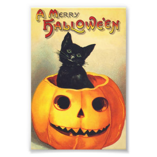 Black Cat In Pumpkin Merry Halloween Vintage Art Photograph