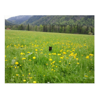 Black cat in the meadow - postcard