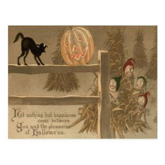 Black Cat Jack O Lantern Pumpkin Haystack Postcard