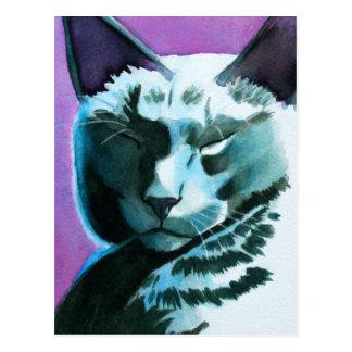 Black Cat Marina Regal Postcard
