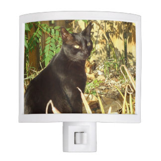 Black Cat, Morning Sun Night Lights