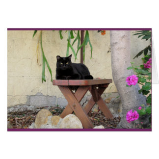 Black Cat on Bench with Pink Geraniums Card