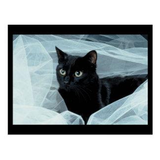 Black Cat Postcard