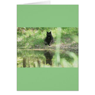 'Black Cat Reflections' Greeting Card