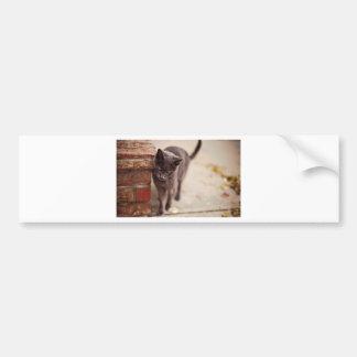 Black Cat Rubs Against A Brick Wall Bumper Sticker