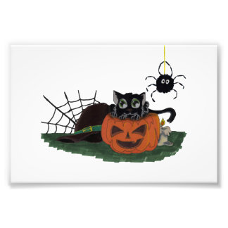 Black Cat sits on a Jack o Lantern with Spider Photograph