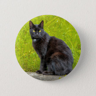 Black cat sitting outdoor 2 inch round button
