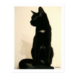 black cat sitting postcard