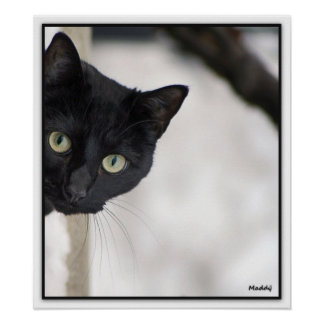 Black Cat - with border Poster