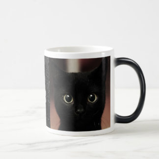 Black Cats Magic Mug