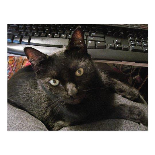 Black Cats Rock Postcard