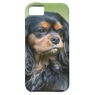 Black Cavalier King Charles Spaniel iphone Case