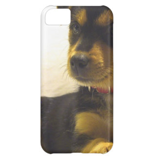 Black Chihuahua Cover For iPhone 5C
