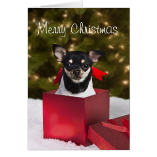 Black Chihuahua Christmas card