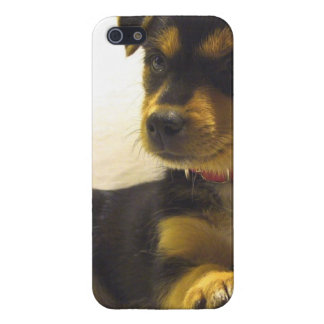 Black Chihuahua Cover For iPhone 5