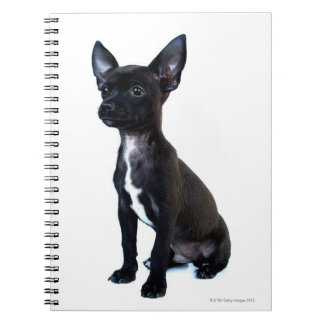 Black Chihuahua puppy Notebook