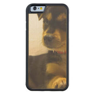Black Chihuahua Carved® Maple iPhone 6 Bumper