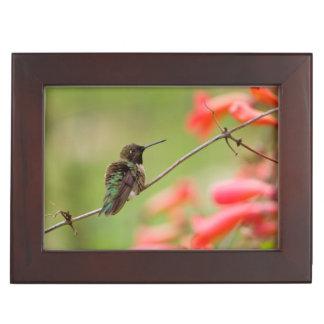 Black-Chinned Hummingbird Keepsake Box