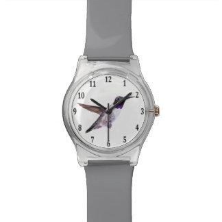 Black-chinned Hummingbird Watch