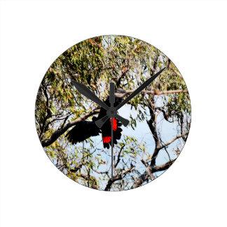 BLACK COCKATOO IN FLIGHT QUEENSLAND  AUSTRALIA WALLCLOCK