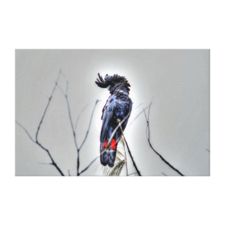 BLACK COCKATOO QUEENSLAND AUSTRALIA ART EFFECTS CANVAS PRINT