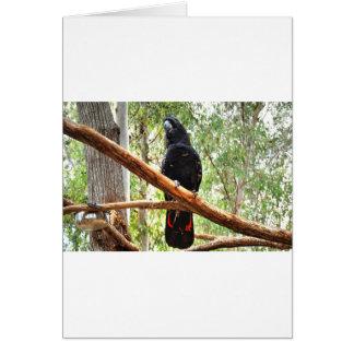 BLACK COCKATOO QUEENSLAND AUSTRALIA CARD
