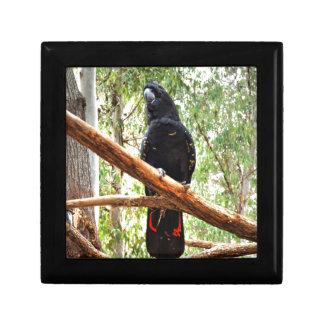 BLACK COCKATOO QUEENSLAND AUSTRALIA GIFT BOX