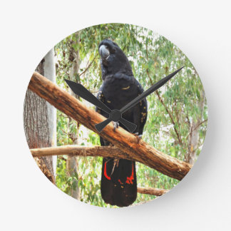 BLACK COCKATOO QUEENSLAND AUSTRALIA ROUND CLOCK