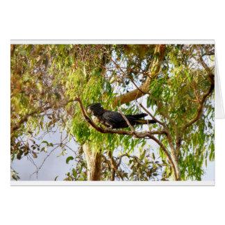BLACK COCKATOO RURAL QUEENSLAND AUSTRALIA CARD