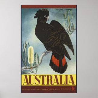 Black Cockatoo Vintage Poster