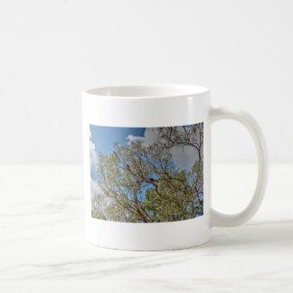 BLACK COCKATOO'S RURAL QUEENSLAND AUSTRALIA COFFEE MUG