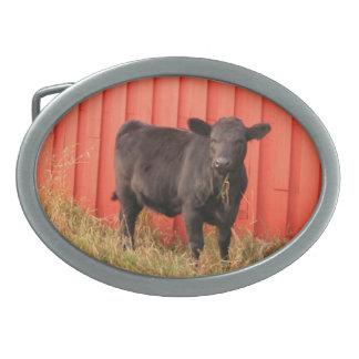 Black Cow Red Barn Oval Belt Buckle