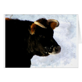 Black Cow with horns Card