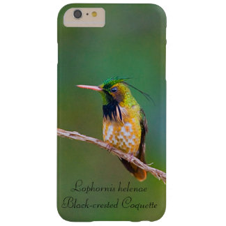 Black-crested Coquette Barely There iPhone 6 Plus Case