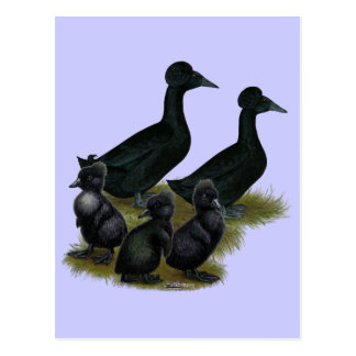 Black Crested Duck Family Postcard