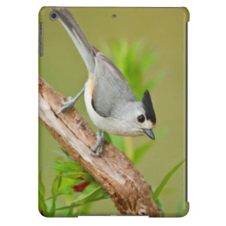 Black-Crested Titmouse iPad Air Cover