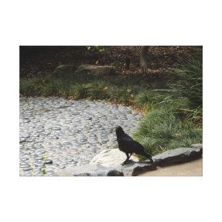 Black Crow Canvas Prints
