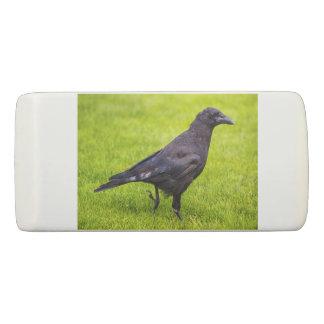 Black crow eraser