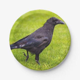 Black crow paper plate