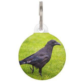 Black crow pet name tag