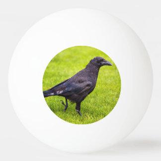 Black crow ping pong ball