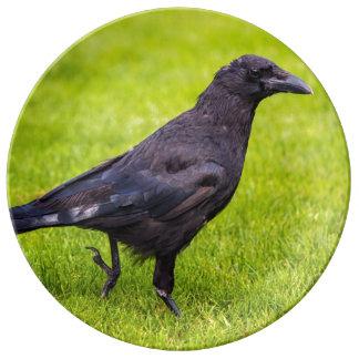 Black crow plate