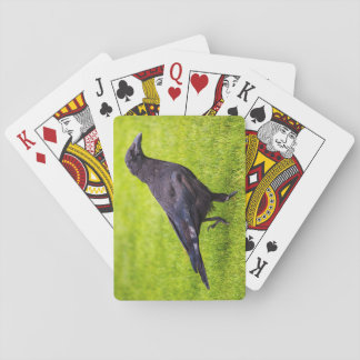 Black crow playing cards