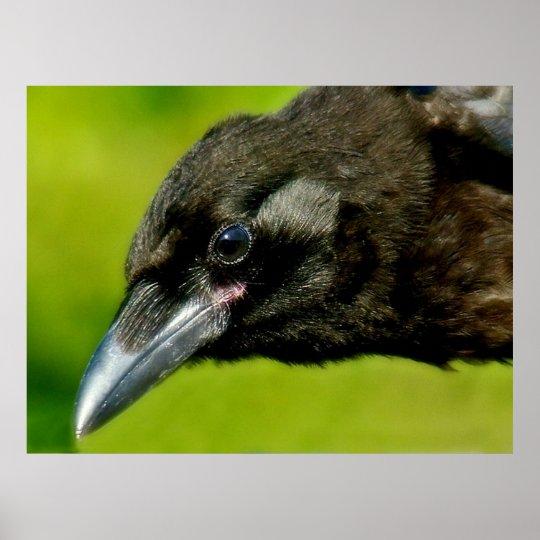 black crow poster