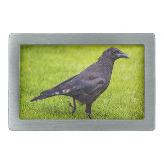 Black crow rectangular belt buckle