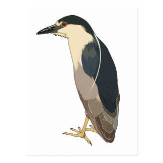 Black-crowned Night Heron Bird Postcard