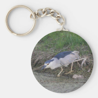 Black-crowned Night-heron hunting Basic Round Button Keychain