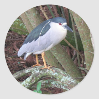 Black Crowned Night Heron sporting his white Plume Classic Round Sticker